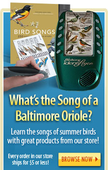 What's the Song of a Baltimore Oriole? Learn the Songs of Summer Birds With Great Products From Our Store!